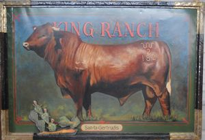 King Ranch - Santa Gertrudis