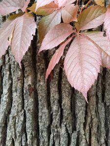Fall - Lupi's Wonders