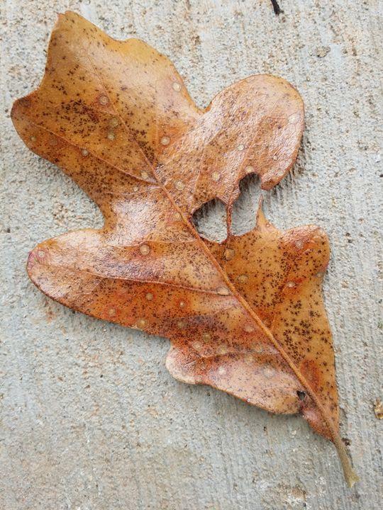 leaf on pavement - Lupi's Wonders