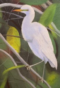 Friendly Egret