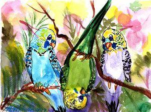 Goofy Parakeets