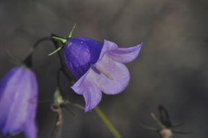 Cute little lila flowers
