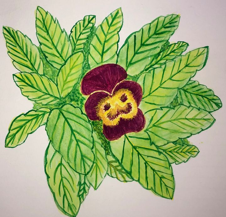 Pansy Flowers - HPaints