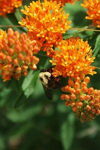 Pollenation