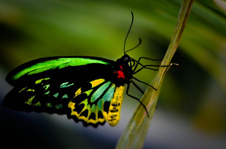 Butterfly - Wardenclyffe Photography