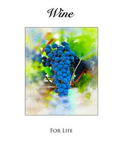 Wine Grapes on the Vine - Karl Knox Images