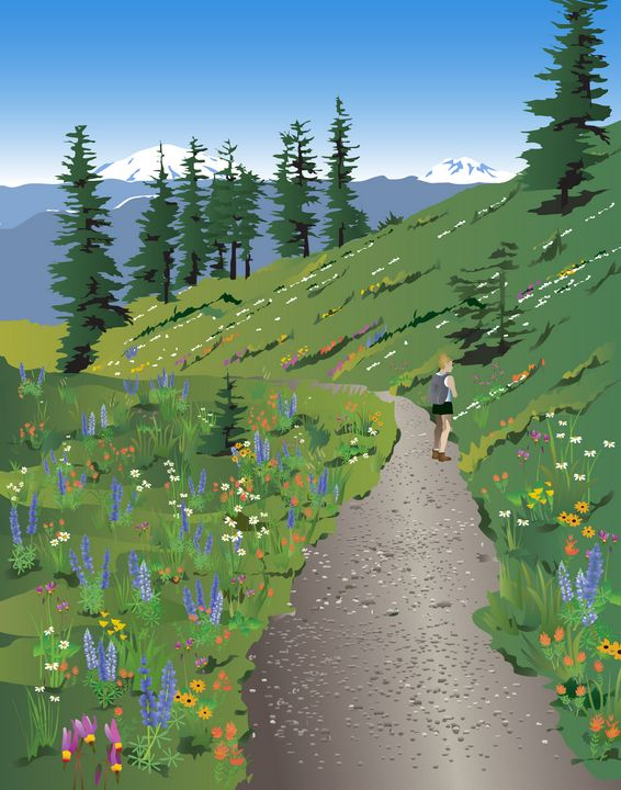 Silverstar Mountain Wildflowers - Christine Rains