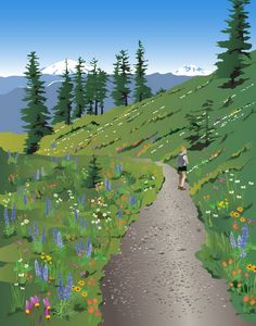 Silverstar Mountain Wildflowers