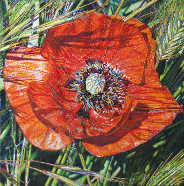Coquelicot - Poppy - Christophe Giral