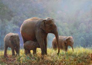 Elephant' s family