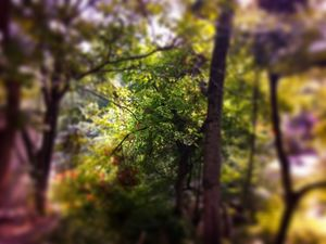 The blurry nature