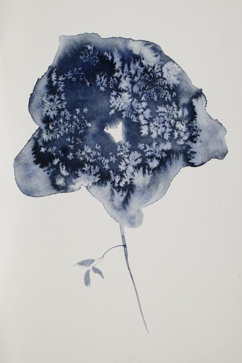Payne's Grey Solitary Floral - Sbari