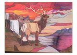 Bull Elk Looking over his home