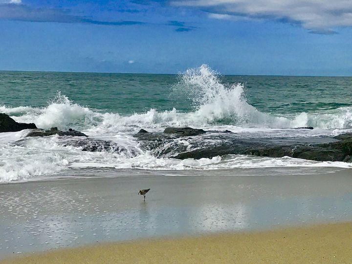 Sand Piper enjoying the day - Laguna Beach Colors