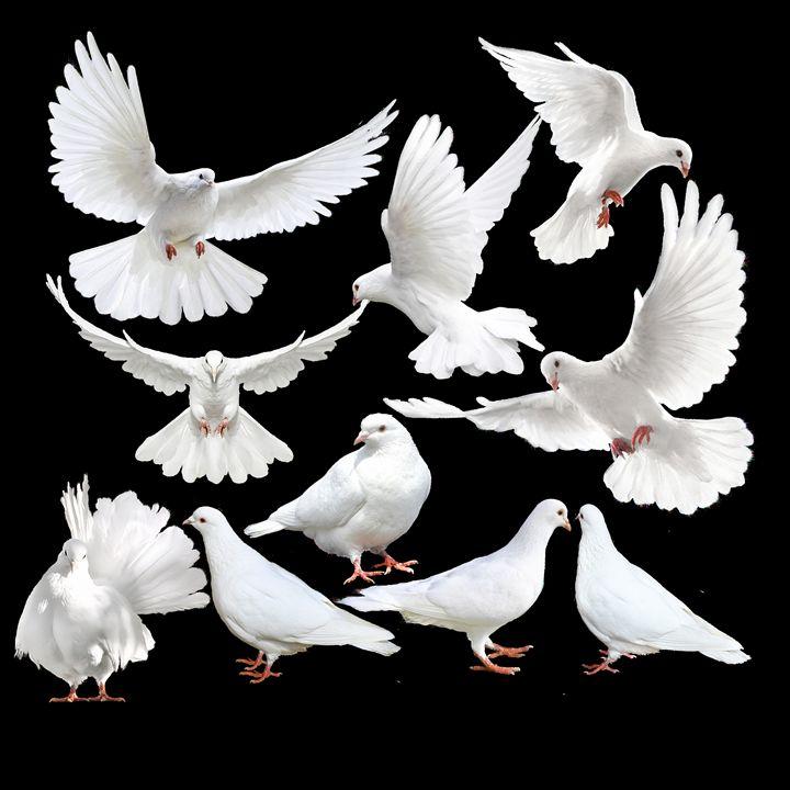 Dove - Mr Dũng