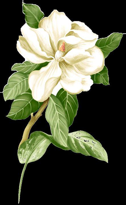 flower - Mr Dũng