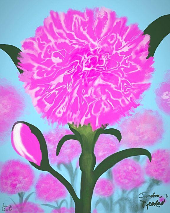 January, Carnation - DigitalNana