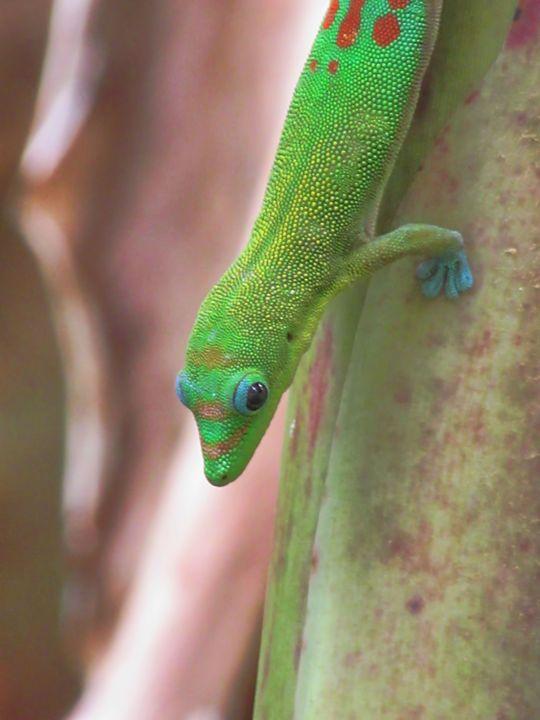 Green Gecko - Photography by Pamela