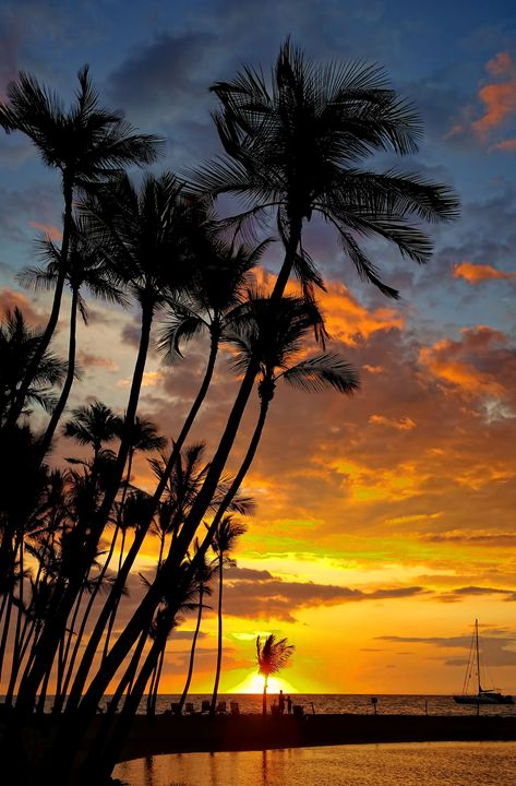 Silhouetted Palms - Photography by Pamela