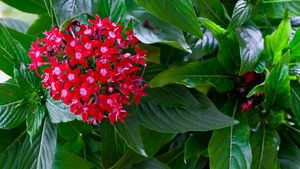 Red blossoms of summer