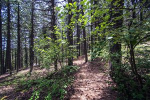 Artemis nature trail Cyprus