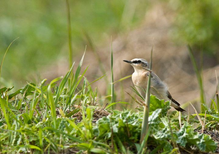 bird in grass - Evripidou M