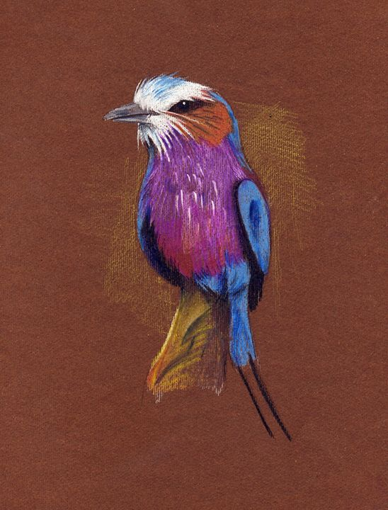 lillac breasted roller drawing - Evripidou M