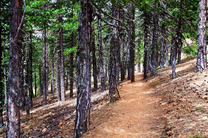 Artemis nature trail Cyprus - Evripidou M