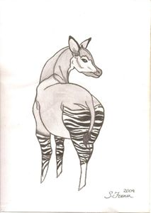 Okapi Original