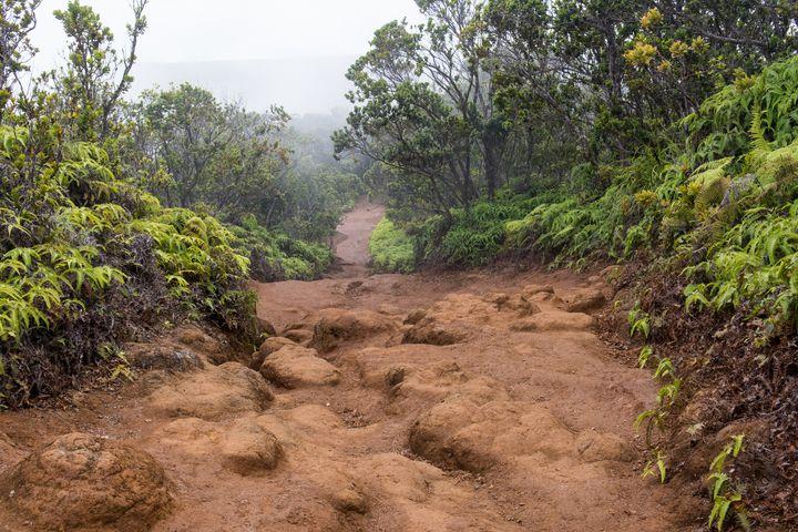 Pihea trail on Kauai Island Hawaii - Kristin Greenwood