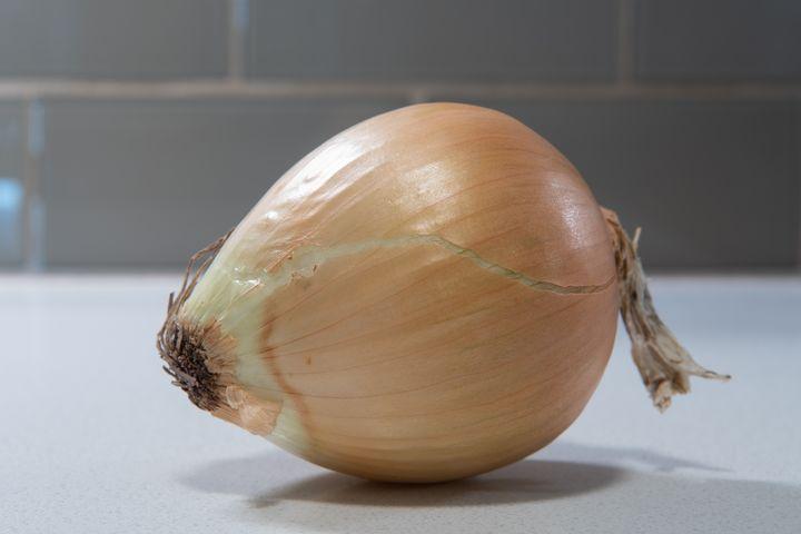 One fresh onion in kitchen - Kristin Greenwood