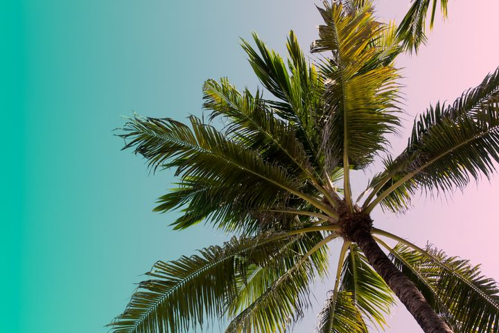 Looking at top of palm tree in Bali - Kristin Greenwood