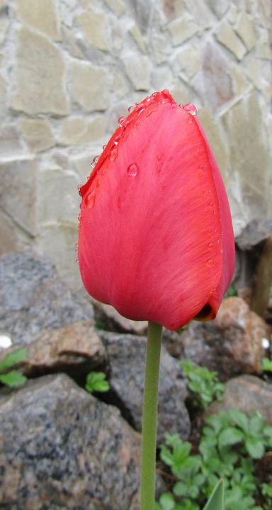 Under the rain - Antonina