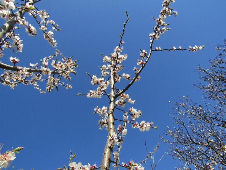 Spring  is here - Antonina