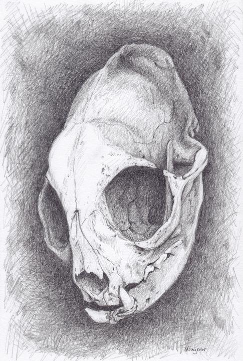 Cat Skull - Blightedangel Art