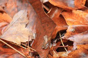 Mini Frog