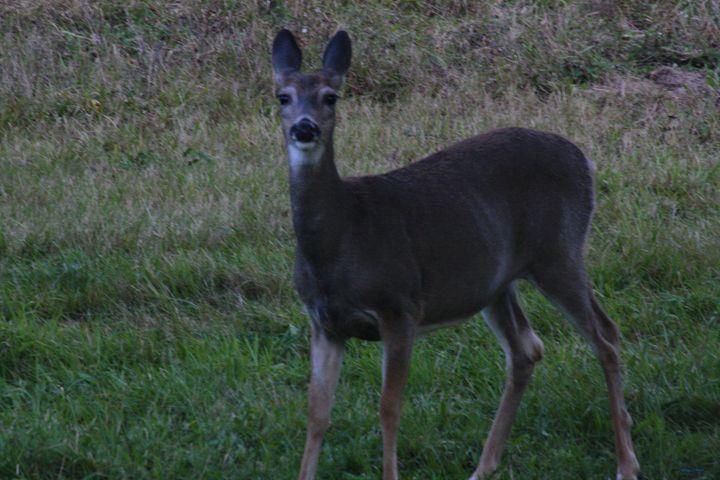 Doe a Deer - Blue Star Arts and Crafts