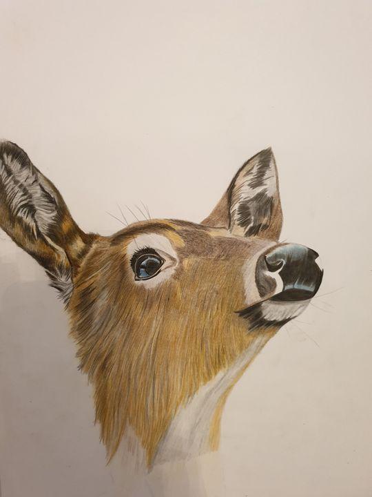 Female Deer - SLART