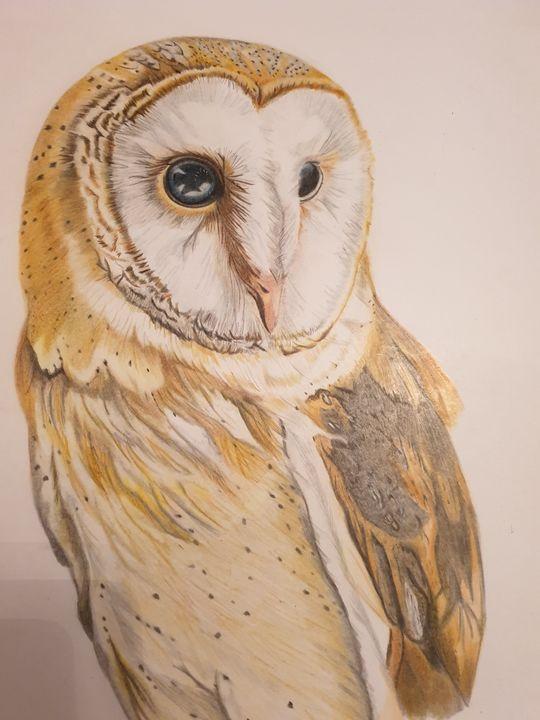 Colour pencil barn owl - SLART
