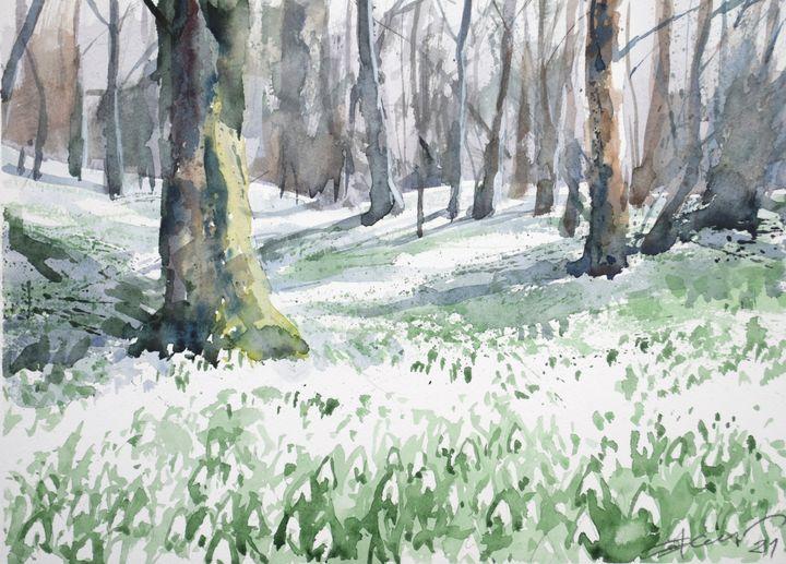 Woods full of snowdrops - Goran ŽIgolić Watercolors
