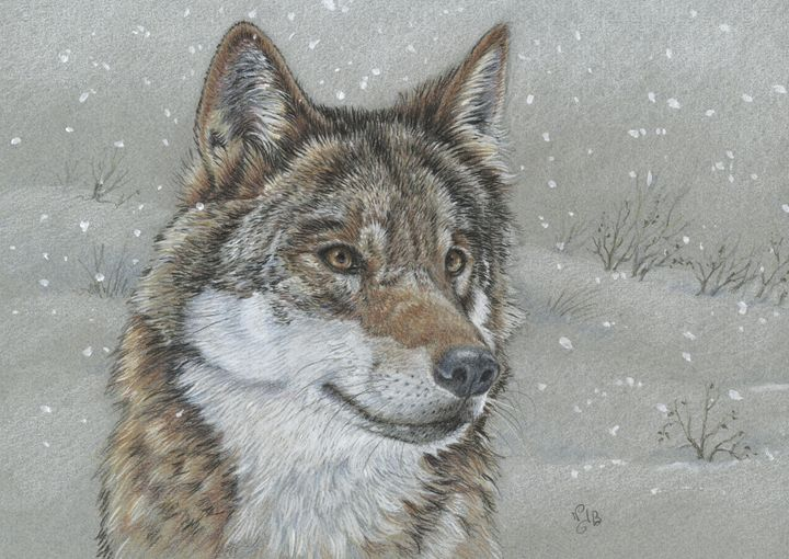 Wolf in the snow - Nicole Barrière Jahan