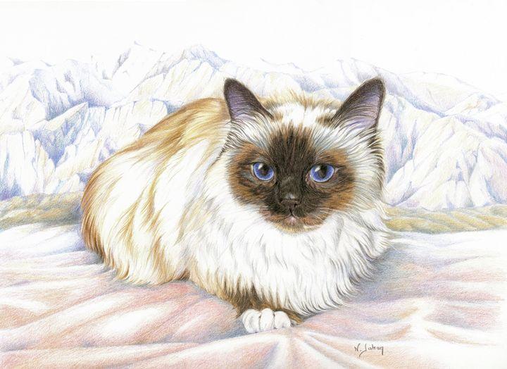 Le chat birman - Birman cat - Nicole Barrière Jahan