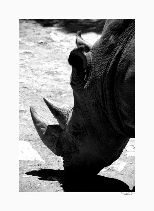 White Rhinoceros - Aldinga Photos Gallery