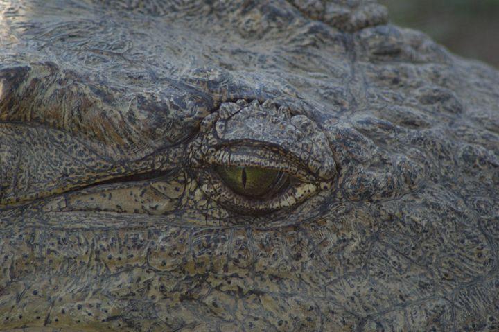 Crocodile Tears - PhinnsArt
