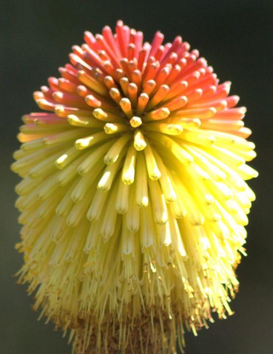 Aloe - PhinnsArt