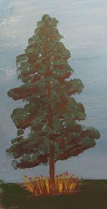 Lone Fir tree