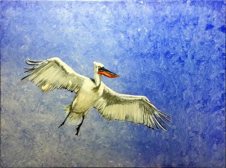 Pelican against a blue sky - Alexander Salmon II