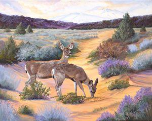 High Desert Mule Deer