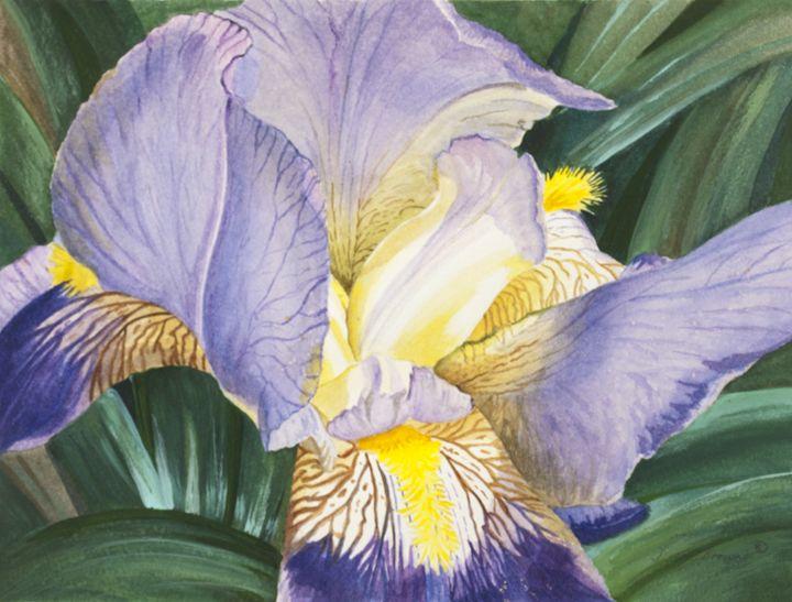 Bearded Iris - Paintings by Diana V Brown