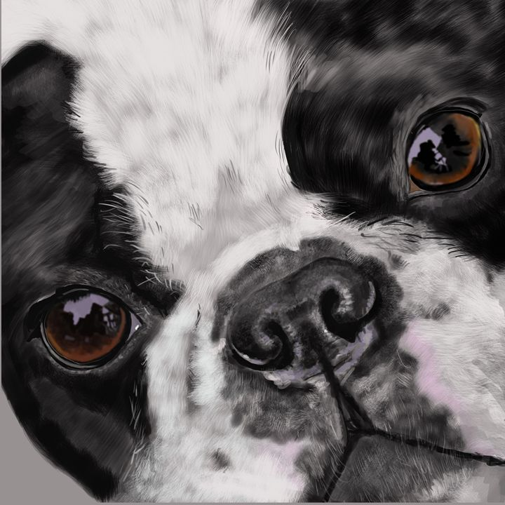 Boston Terrier Up Close and Personal - Dogone Art